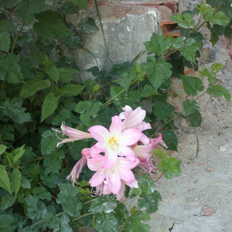 flores no quintal.jpg
