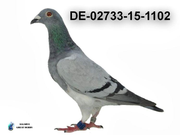 DE-02733-15-1102.jpg