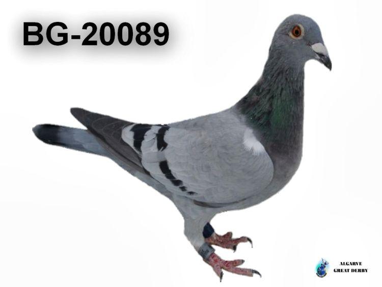 BG-20089.jpg