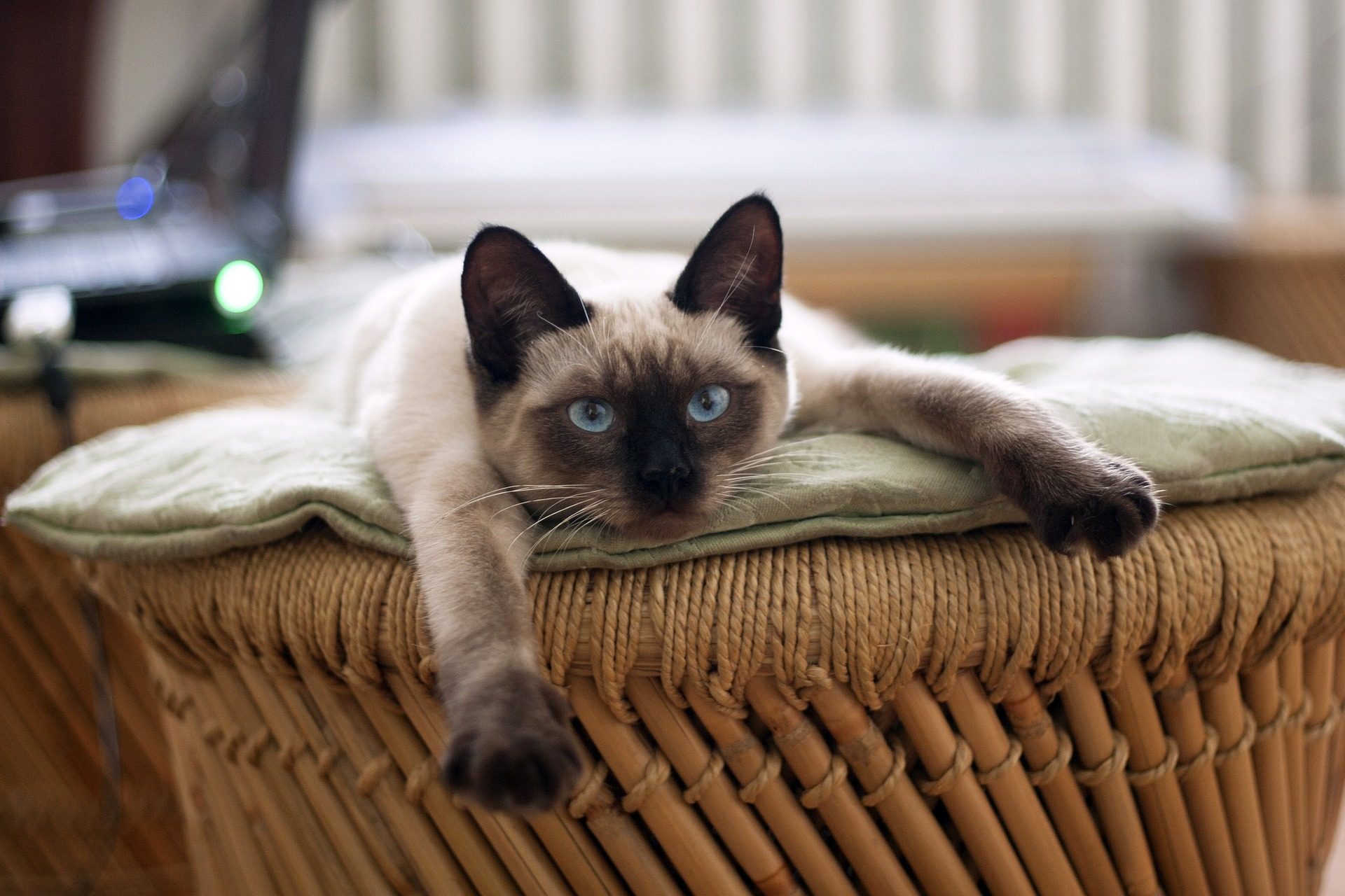 cat-882049_1920.jpg
